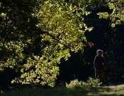 Őszi séta a Jókai-kertben