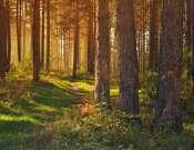 Fedezd fel az erdőt az erdészekkel! - Erdők hete