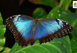 Séta a pillangók között - Megnyílt a Lepkekert