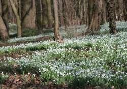 Hóvirágünnep az Alcsúti Arborétumban