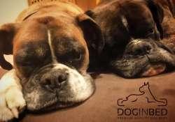 Amikor ugatni lehet a különbséget - DogInBed prémium kutyafekhelyek