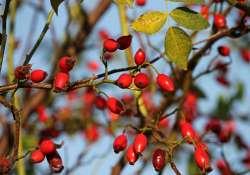 Az őszi erdő vitamindús gyümölcsei
