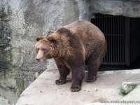 Nem látta meg az árnyékát a medve!