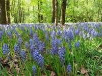 4 tavaszi kirándulóhely