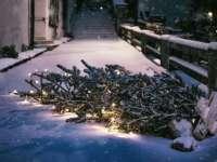 Indul a fenyőfák begyűjtése – Itt a budapesti gyűjtőhelyek listája