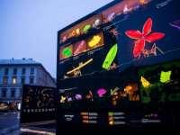 Szabadtéri kiállítás nyílt a belvárosban Máté Bence természetfotóiból
