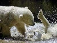 Indul a szezon az Állatkertben: új jegesmedvék, állatkölykök, programok