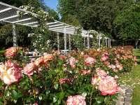 Töltődj fel a virágmező látványától! – 5 rózsakert a közelben