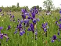 Virágzik a nőszirom! - Újra nyitva a Soroksári Botanikus Kert