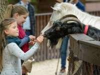 Parasztudvar nyílt a Budakeszi Vadasparkban